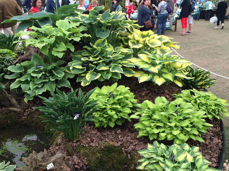 Hosta Display, Exhibit Hall